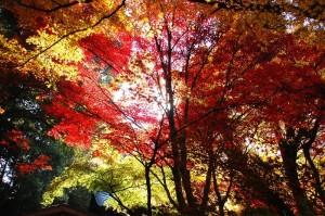 あまりにも鮮やかな 日本の秋ですね